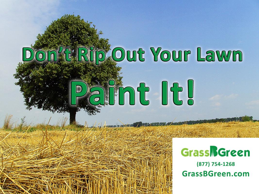 Paint Your Lawn