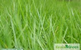 GrassBGreen Tips: Knowing When to Plant Your Grass Seed